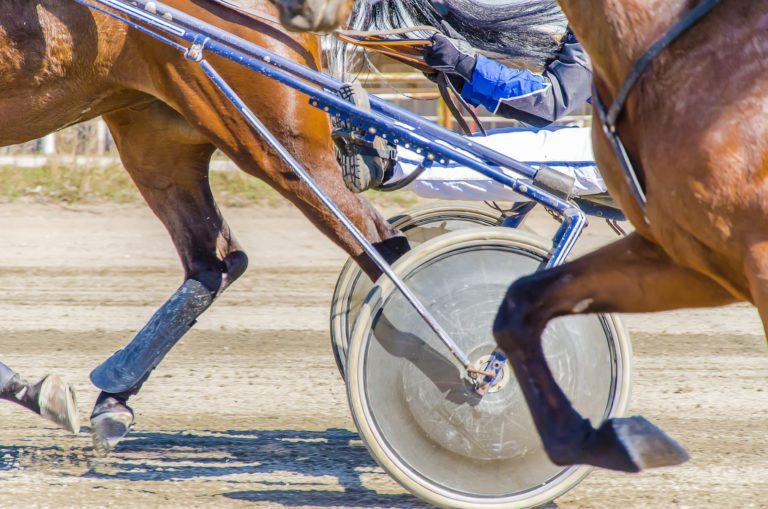 Kosttillskott för hästar