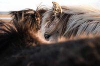 Biverkningar av glukosaminsulfat för häst och hund