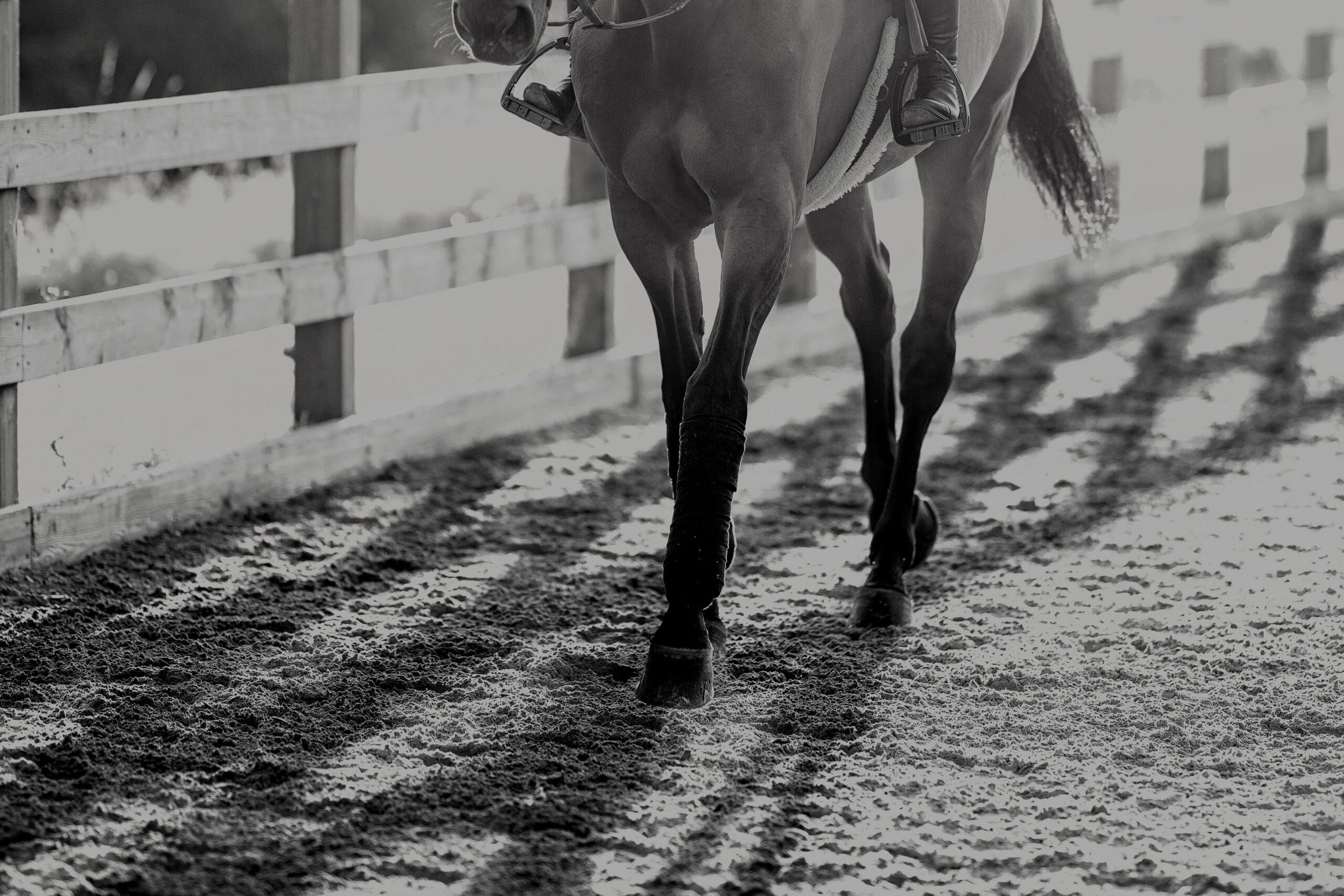 Ny forskning visar att hästens sjuka broskceller kan reparera sig